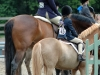 The line up at a Fiesta Farm Horse show, April 2005