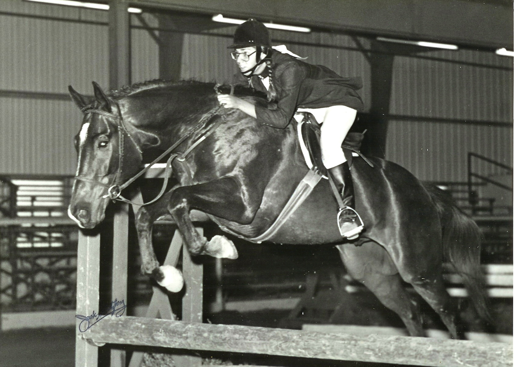 Bumpers: young horse owned by Claudia Mora1977