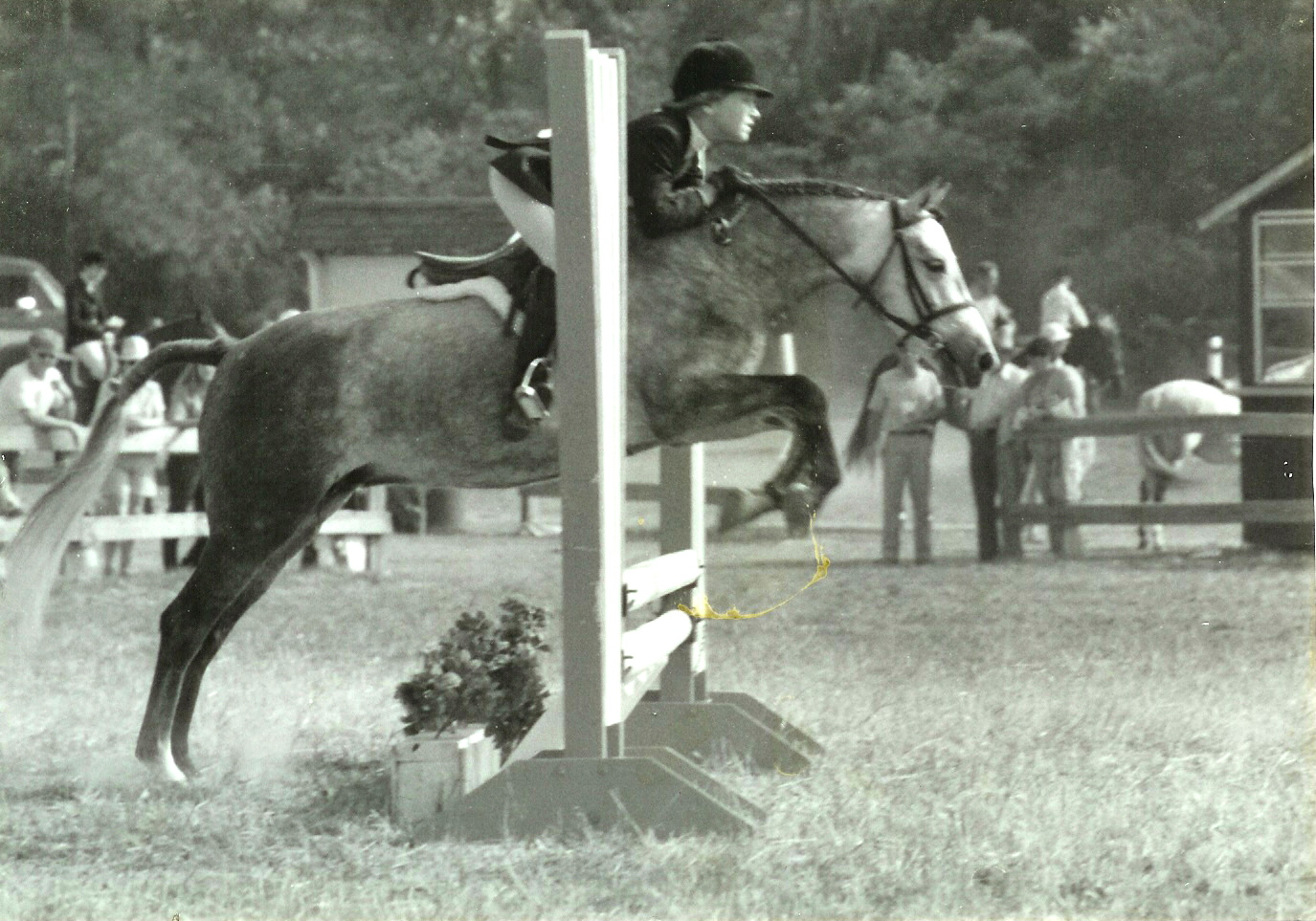Pinchacre Penifore & Molly Ashe in 1984 at the John Rush horse show in Aiken, SC