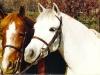 Fiesta Nic Nac & Fiesta Fancy That, both small ponies by Farley Spyglass