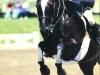 A. Teague Kentucky Spring Horse Show 1994
