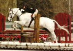 "Sterling Silver aka ""Lenny"" showing in the medium pony division"