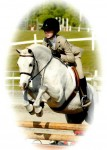 """Checker"", medium pony for lease at Fiesta Farm in Knoxville, TN"