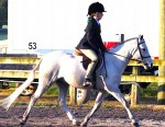 Small pony under-saddle spring 2012