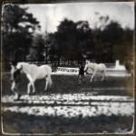 The Pony Hunter Model: Halloween 2013