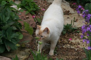 "Wilson in the garden ""hunting""."