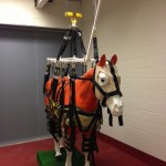 There are several large animal support slings now in use for recovery and support of large animals at the Veterinary Teaching Hospital at UT.